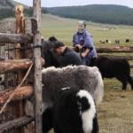Björn milking thumbnail