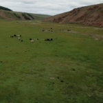 View over herds of horses, yaks, sheep and goats-4