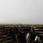 Milking scene-5