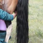 Milking mares (Khövsgöl)-1