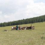 Milking mares (Khövsgöl)-4
