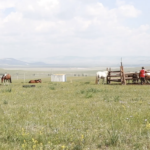 Milking mares (Khövsgöl)-5