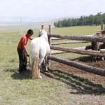 Milking mares (Khövsgöl)-6